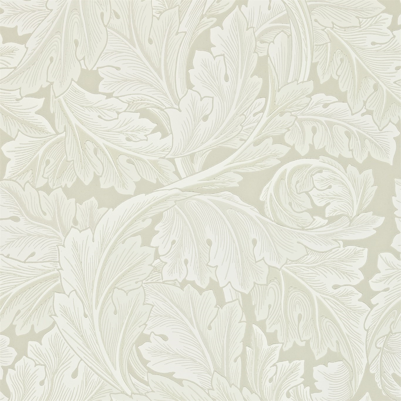 Picture of Acanthus - 212554