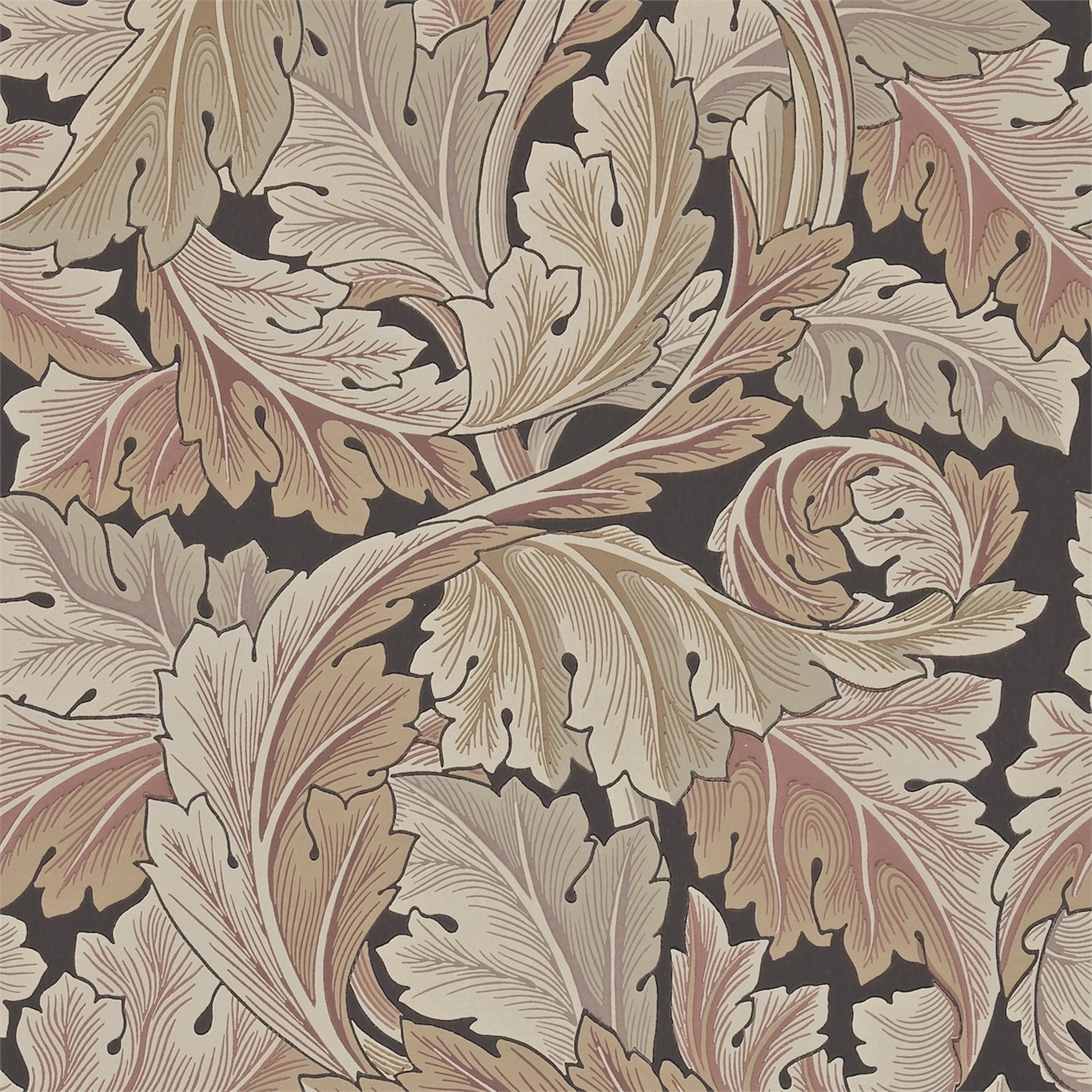 Picture of Acanthus - 212551